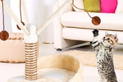 Save Your Furniture and Keep Your Cat Entertained with a Cat Play Tree! Feat. Three Branches for Your Cat to Climb & Play. Plus P&H