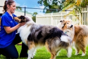 Leave Your Four-Legged Friend in the Good Hands of the Team at Hanrob Pet Hotels! Ft. Doggy Daycare and Training Packages from $19. Multiple Locations