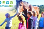 Enjoy a Full Day of Family Fun w/ the Animals at Calmsley Hill City Farm! Feat. Australian Native Animals, Patting Sessions & More!