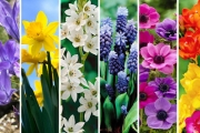How Does Your Garden Grow? Get Beautiful Blooms with 150 Ready-to-Plant Flower Bulbs + Growing Guide! Incl. Tulips, Freesias, Daffodils & More