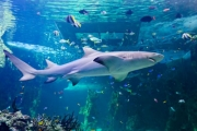 Discover Deep-Sea Wonders with an Entry to SEA LIFE Sydney, Darling Harbour! Explore Penguin Expedition, Dugong Island, South Coast Shipwreck & More
