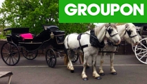 Touring the City w/ Friends? Enjoy a 45-Min Horse-Drawn Carriage Ride from Unique Carriage Hire! See Top Spots Incl. Treasury Gardens, Yarra River & More