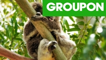 Get Up Close & Personal with Koalas, Kangaroos, Wallabies & More w/ Entry to Warrawong Wildlife Sanctuary! Valid for Weekday or Weekend for Age 16+