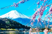 JAPAN w/ FLIGHTS 8-Day Tour During Cherry Blossom Season! Visit Mt Fuji, Kyoto Temples, Tokyo & More. Ft. Accommodation, Most Meals, Transfers & More!