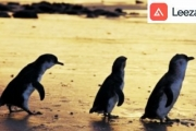 Explore the Wonders of Phillip Island w/ a Penguin Parade & Wildlife Park Tour! Visit the Seal Centre, Feed the Kangaroos, Watch the Penguins & More