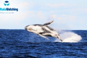 Have a Whale of a Good Time with Sydney Princess Cruises! Exciting 4-Hour Sydney Whale Watching Cruise with Buffet BBQ Lunch. Weekday or Weekend