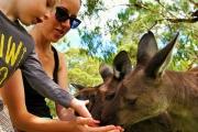 Get Up Close & Personal w/ Wallabies, Wombats & More at Urimbirra Wildlife Park! Walk Through Rainbow Lorikeet, Kangaroo Feeding & More!