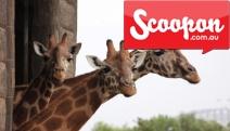Spend a Day of Wild Fun w/ Entry to the Award-winning Taronga Zoo! Ft. 10-themed Areas Incl. Wild Australia & Wild Asia + Sky Safari Cable Car Ride