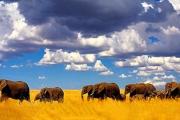 AFRICAN SAFARI 9-Day Tanzania & Kenya Adventure! Incl. Animal Safari, Select Meals, Sightseeing, Daily Brekkie, Private Transportation & More