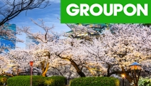 JAPAN Savour the Best of Japan with an 8-Day Handpicked Tour! Ft. Osaka, Kyoto & Tokyo with Accommodation, Local Transfers, Select Meals & More