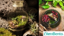 Create Your Own Mini Garden in a Glass Bowl w/ a Terrarium Making Workshop from ClassBento! Learn the Unique Method of Construction & More + Refreshments