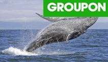 Witness the Beauty of Nature w/ a Weekday Whale Watching Cruise Incl. BBQ Lunch! Or Upgrade for Weekend Cruise. See Whales or Cruise Again for Free!
