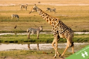 SOUTH AFRICA 6-Night Tour! 4 Nights in Cape Town + 2 Nights at Mabula Game Lodge in Limpopo Province for a 'Big Five' Safari! Upgrade to Add Flights