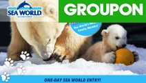 It's a Whole New World of Fun & Adventure at Sea World! Grab a Single Day Pass & Meet Mishka, Ride Jet Rescue, See Illuminated Sea Jellies & More