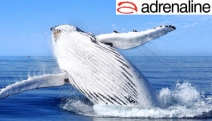 See the Majestic Whales During Migration w/ a Whale Watching Cruise Departing Darling Harbour w/ Go Whale Watching! Guaranteed Sightings or Free Return Cruise