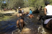 Ride On w/ a 90-Min Horseback Trail Ride for Beginners Along the Banks of the Moore River w/ 1800 Trail Rides! Perfect Family Fun Activity!