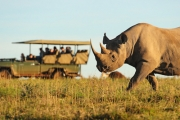 SOUTH AFRICA 14-Day Conservation Experience at Shamwari Game Reserve in Port Elizabeth, SA! Incl. Flights, Accommodation, Meals & More