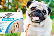 Keep Pets Free of Pests w/ a Box of Frontline Original for Cats & Dogs! Fast-Acting Formula to Easily Treat Fleas, Ticks & Lice on Small & Large Pets