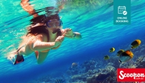 Get Your Dose of Underwater Fun w/ a 4-Hr Snorkelling & Island Adventure from GC Dive Centre & Marine Training College! Opt for Scuba Diving Experience