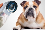 Remove Shedding Hair, Dirt & Debris from Your Pet's Coat with a Pet Hair Vacuum! Plus Use it to Keep Your Clothes & Furniture Fur Free!
