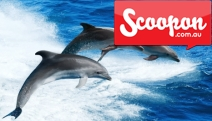 Enjoy a Day Out w/ Dolphins & Seals w/ a 1.5-Hr Eco Adventure Cruise from WaterMaarq, Sorrento! Ft. Guided Activities & Commentary. Weekday or Weekend