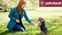 Going Away Over the Holidays? Let PetCloud Help You Find Pet Sitters & Dog Walkers for Your Beloved Pet! Incl. Meet & Greet, Daily Updates & More