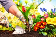 How Does Your Garden Grow? Get Beautiful Blooms with 150 Ready-to-Plant Spring Flower Bulbs + Growing Guide, Delivered! Ft. Tulips, Freesias & More