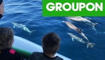 You'll Dolphin-itely Have a Good Time w/ a 75-Minute Dolphin Watching Cruise from Adelaide Ocean Safari! Fun Activity for the Whole Family