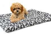 Spoil Your Fur Baby with a Luxury Pet Bed! Shop a Range of Styles Incl. Pet Mat, Beds, Luxe Sofa Beds & More. Durable and Machine Washable