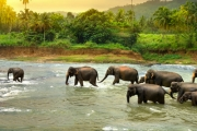 SRI LANKA 11-Day Breathtaking Tour! See an Elephant Orphanage, Encounter Wildlife like Leopards at Yala National Park, Visit Dynamic Colombo & More