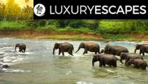 SRI LANKA 11-Day Breathtaking Tour! See an Elephant Orphanage, Encounter Wildlife like Leopards at Yala National Park, Visit Dynamic Colombo & More
