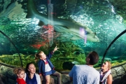 Enjoy a Fun Family Day Out with an Entry + Meal Package at SEA LIFE Sydney Aquarium! Ft. the Brand New Penguin Expedition, Shark Walk + Lots More