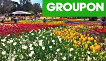 Celebrate Spring in Canberra w/ 1-Day Floriade Tour! The Biggest Flower Festival in Australia! Incl. Visits to Commonwealth Park, Mount Ainslie & More