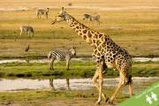 SOUTH AFRICA Experience an Unforgettable 6-Night Essential South Africa Tour! Incl. Internal Flight, Safari, Accommodation, Most Meals & More