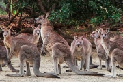 See Kangaroos, Emus & Wallabies Roaming Free & Happy w/ Full Day Entry to Australia Walkabout Wildlife Park! Upgrade for an Overnight Cottage Stay