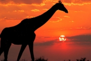 AFRICAN SAFARI 10-Night African Adventure Incl. Cape Town, Swaziland, Joburg, Kruger National Park Game Drive & More. Incl. Lots of Inclusions