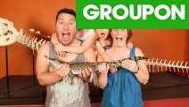 Crikey! Get Up Close & Personal to Saltwater Crocs @ Crocosaurus Cove! See the World's Largest Display of Aussie Reptiles! Must-Do Darwin Attraction
